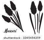 silhouette of muscari flower. b ... | Shutterstock .eps vector #1045454359