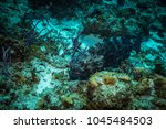 fish on the coral reef near... | Shutterstock . vector #1045484503