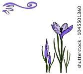 purple crocuses card vector... | Shutterstock .eps vector #1045501360