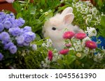 Close Up Of White Rabbit In...
