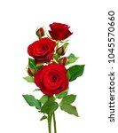 bouquet of red roses isolated... | Shutterstock . vector #1045570660