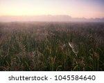 foggy morning on meadow. rural... | Shutterstock . vector #1045584640