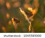beautiful butterfly... | Shutterstock . vector #1045585000
