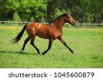 thoroughbred horse runs through ...   Shutterstock . vector #1045600879
