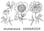 hand drawn peony flower... | Shutterstock .eps vector #1045692529