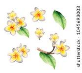 watercolor illustrations of...   Shutterstock . vector #1045693003