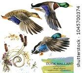 mallard duck hand drawn...   Shutterstock . vector #1045700374