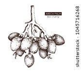vector areca palm illustration. ... | Shutterstock .eps vector #1045716268