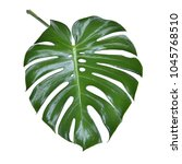 monstera leave texture tropical ... | Shutterstock . vector #1045768510