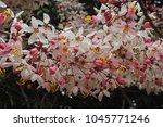 flowers beautiful pink | Shutterstock . vector #1045771246