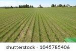 weed outbreak in a crop of... | Shutterstock . vector #1045785406