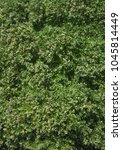 green leaf bough aerial view of ... | Shutterstock . vector #1045814449
