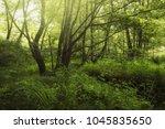 green natural woodland...   Shutterstock . vector #1045835650