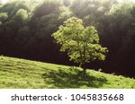 green grass and tree foliage in ...   Shutterstock . vector #1045835668