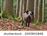 the wild boar  sus scrofa  ... | Shutterstock . vector #1045841848