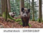 the wild boar  sus scrofa  ... | Shutterstock . vector #1045841869