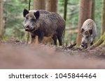 group of wild boars  sus scrofa ... | Shutterstock . vector #1045844464
