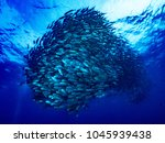 underwater world with many... | Shutterstock . vector #1045939438
