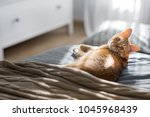 a red cat lies on a gray... | Shutterstock . vector #1045968439