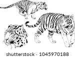 vector drawings sketches... | Shutterstock .eps vector #1045970188