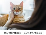 Stock photo a red cat on the arms of a girl a girl is stroking a cat cat humming in her arms 1045975888