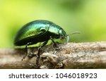 macro of a beetle | Shutterstock . vector #1046018923