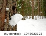 winter landscape with pine... | Shutterstock . vector #1046033128