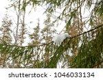 winter landscape with pine... | Shutterstock . vector #1046033134