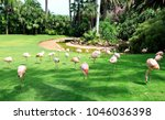 group of pink flamingos ... | Shutterstock . vector #1046036398
