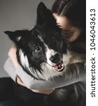 a beautiful black and white dog ... | Shutterstock . vector #1046043613