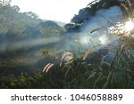 morning  in the jungle with fog  | Shutterstock . vector #1046058889