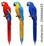 mcaw parrot set. isolated on... | Shutterstock . vector #1046066623