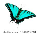 Small photo of Two-tailed swallowtail butterfly, Papilio multicaudata, isolated on white background. The largest of the US tiger sawllowtails, this one has even three tails on each wing. Color change to cyan