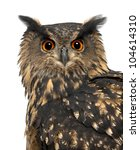 Stock photo eurasian eagle owl bubo bubo years old against white background 104614310