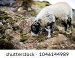 a sheep grazes on the hiking... | Shutterstock . vector #1046144989