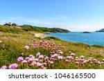 Small photo of herm coast in spring