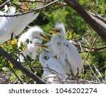 three fledgling white egrets...   Shutterstock . vector #1046202274