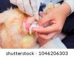 young asian girls treat a... | Shutterstock . vector #1046206303