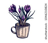 crocus hand drawn isolated... | Shutterstock .eps vector #1046210824