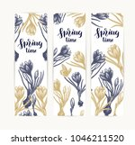 crocus card hand drawn isolated ... | Shutterstock .eps vector #1046211520