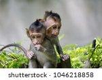a cute monkey lives in a... | Shutterstock . vector #1046218858