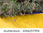 dainty mauve blooms of... | Shutterstock . vector #1046257594
