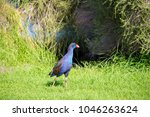 a brilliantly feathered  purple ...   Shutterstock . vector #1046263624
