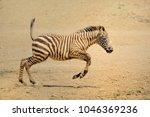 zebra. wild animals on the... | Shutterstock . vector #1046369236
