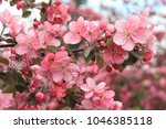 Small photo of Spring blossoms. Blossoming apple tree branch in pink colors. Selective focus. March, April, May, springtime, equinox concept.