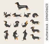 Stock vector cute dachshund various variations poses character vector illustration flat design 1046426623