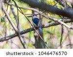 bird  collared kingfisher ... | Shutterstock . vector #1046476570