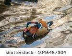 closeup male mandarin duck aix... | Shutterstock . vector #1046487304