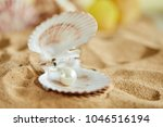 shells on the sand | Shutterstock . vector #1046516194