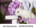 white rabbit climbs out of... | Shutterstock . vector #1046519656